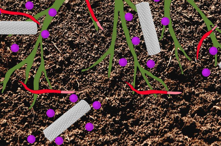Roots of a corn plant infected by endoparasitic nematodes (in red). The plant is being treated with a pesticide (purple sphere) encapsulated into Tobacco mild green mosaic virus (grey rods)