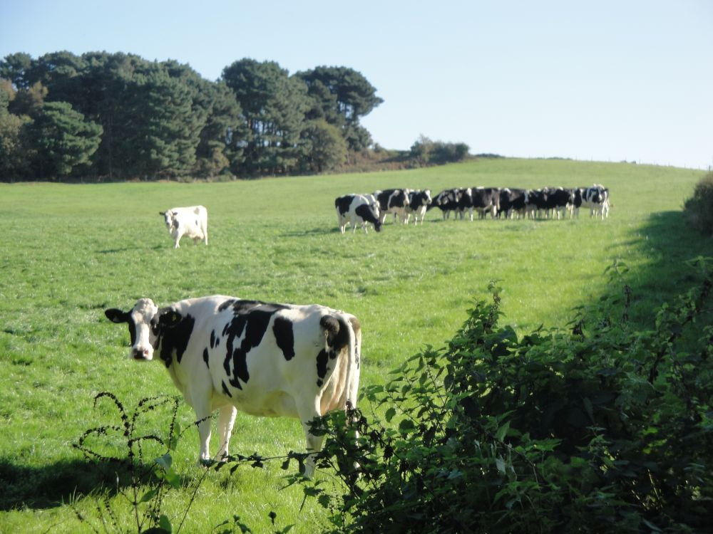 Dairy farm family disappointed over council ruling to build 80 homes