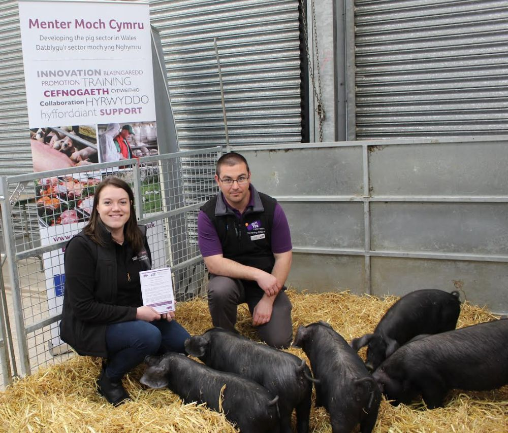 New opportunity launched for Wales YFC members to encourage pig farming