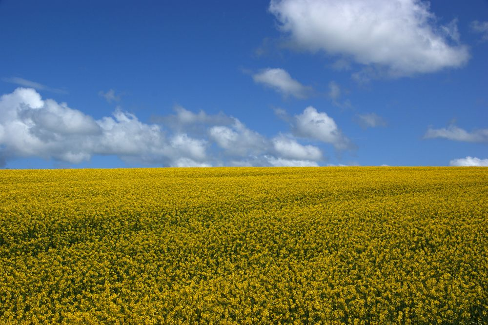 New £25m rapeseed processing plant to be built in Warwickshire