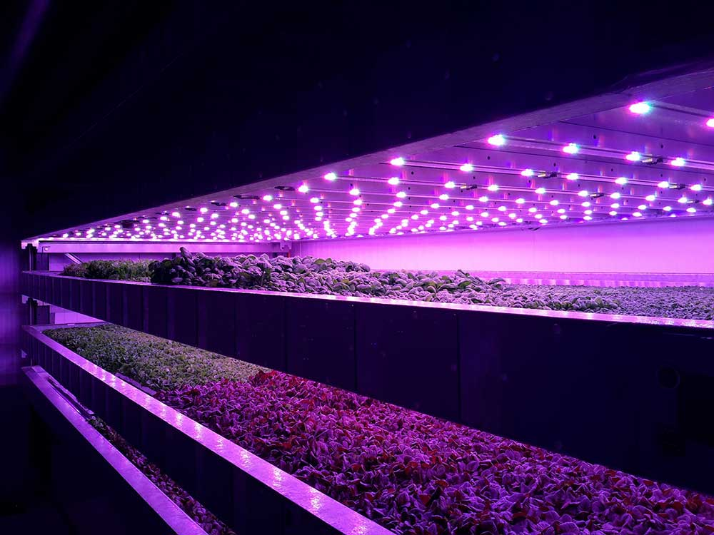 Scotland's first vertical indoor farm to be operational by autumn