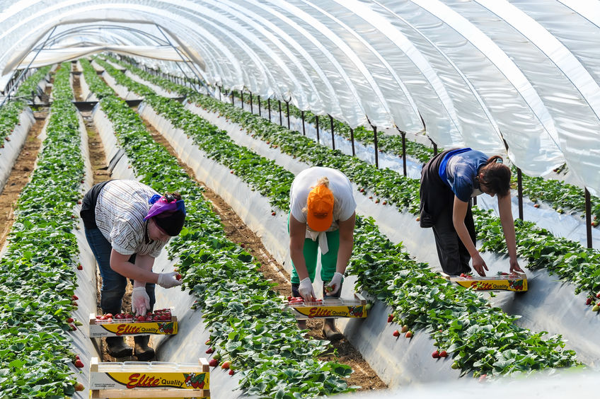 Farming industry calls for clarity over 'settled status' for EU workers in UK