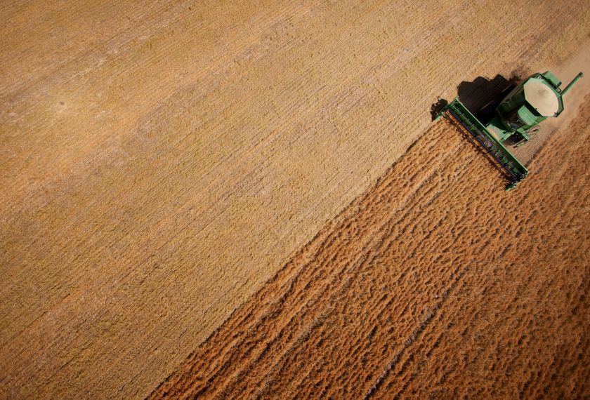 Low prices and Brexit uncertainty drive arable farm changes