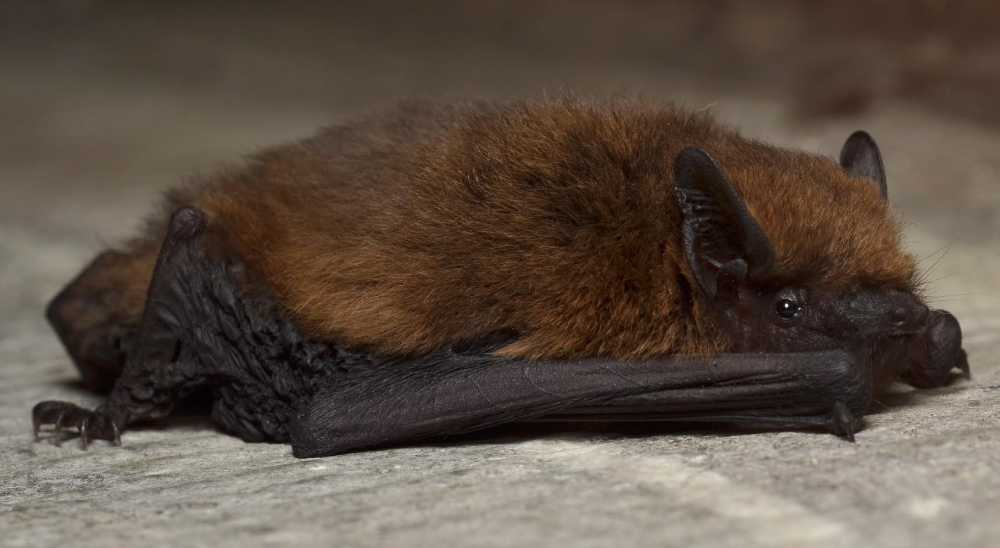 Project launched to look at conservation of bats on farmland
