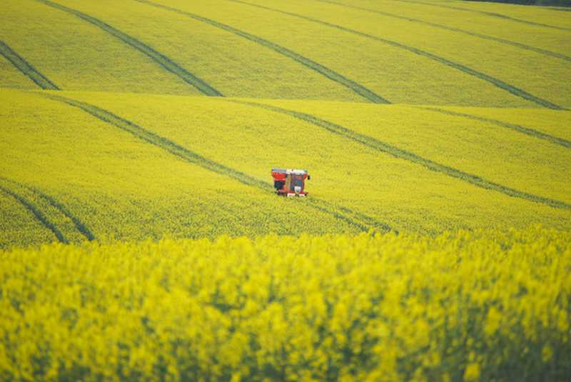 Meeting warns of 'irrevocable impact' on crops without use of neonicotinoids