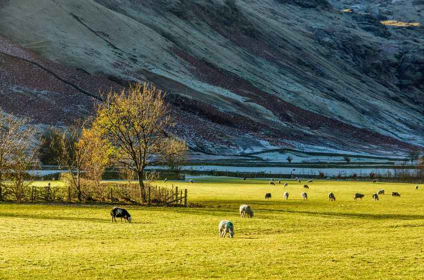 Dramatic farmed landscape: Lake District becomes World Heritage Site