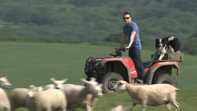 BBC Panorama investigates how Brexit will affect farmers and consumers