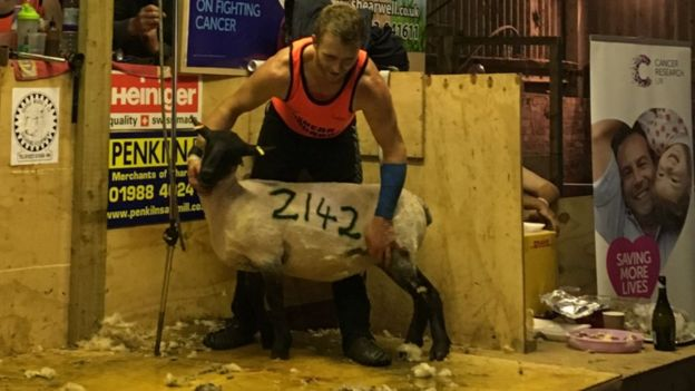 Sheep shearer tackles 2000 sheep in 50-hour marathon challenge