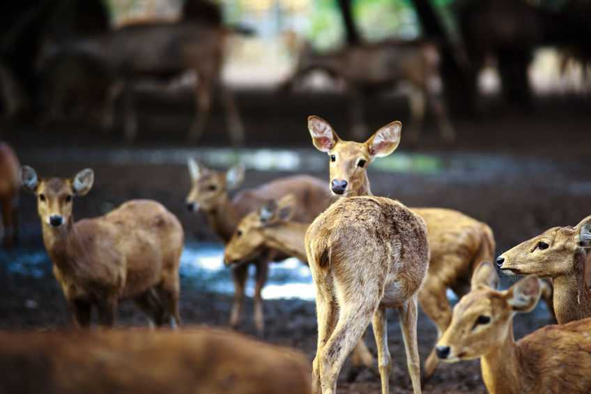 'Deer finance': Support launched specifically for farmers wanting to establish deer herds