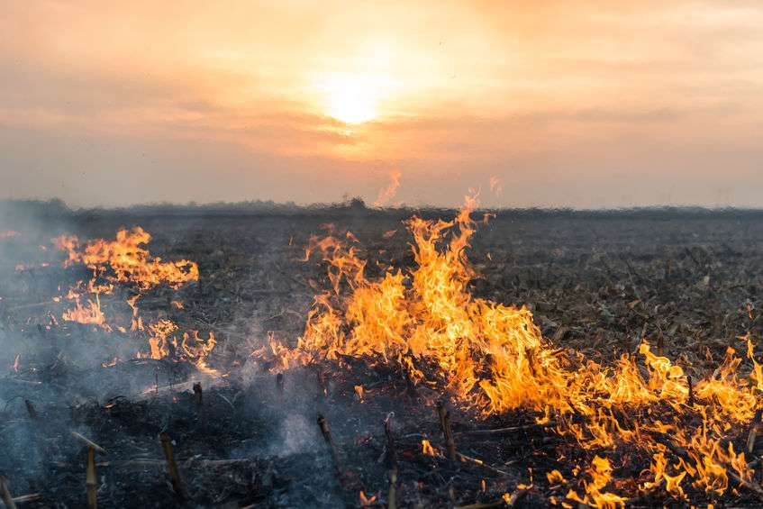 30 acres of wheat burnt due to suspected arson in North Yorkshire