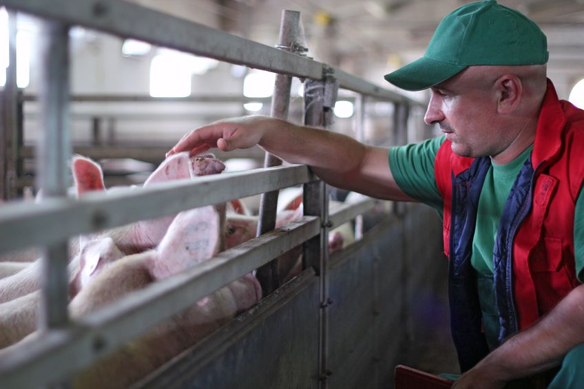 West Yorkshire farmer fined £4000 for feeding meat sandwiches to pigs
