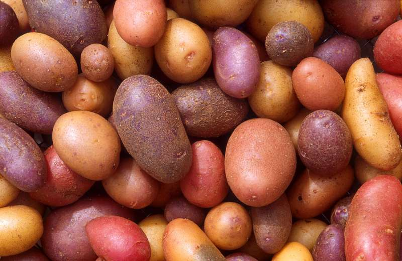 British Potato Industry Award nominations now open!