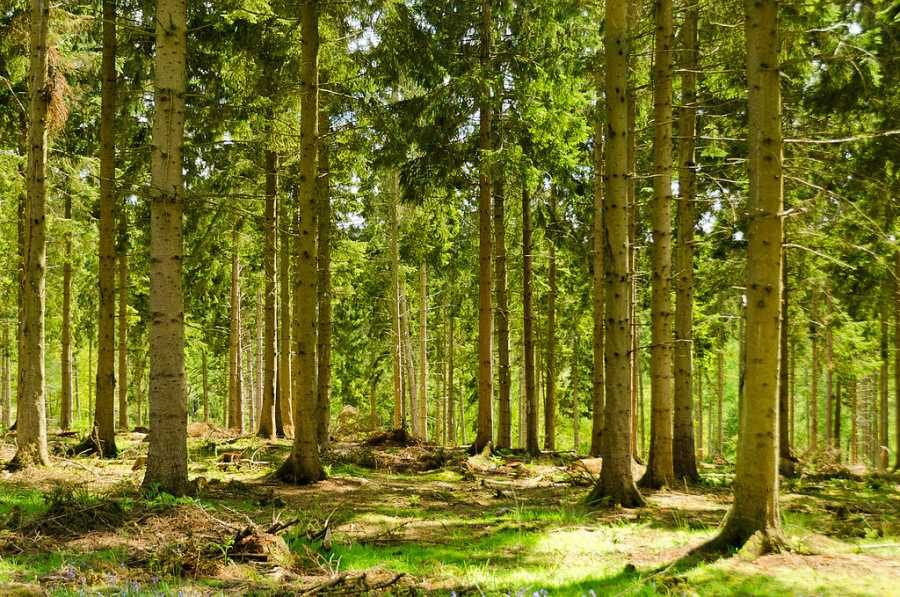 'Ambition needed' for Welsh forestry, committee warns 'urgent' rethink