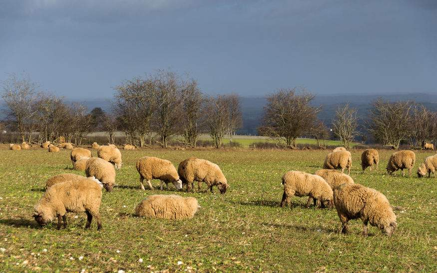 Thinktank sets out 'once in a generation' chance to improve UK farming policies
