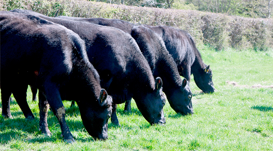 New export market worth £34m opens for UK beef