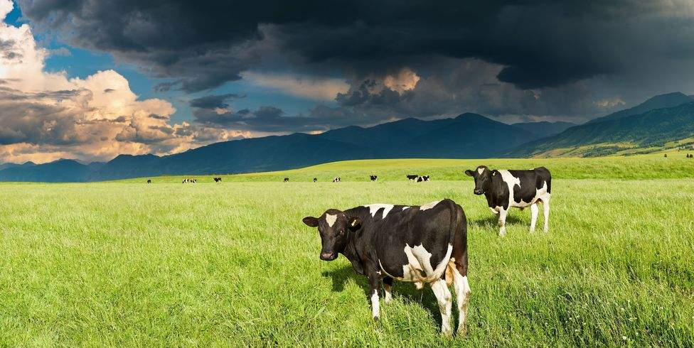 Wet weather sees farmers struggle to meet dairy production estimates