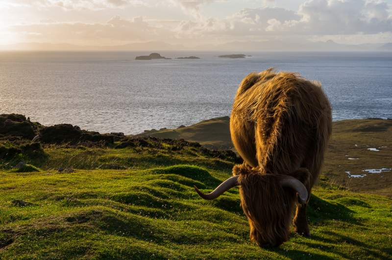 Outbreak of bovine TB in herd of cattle on Isle of Skye