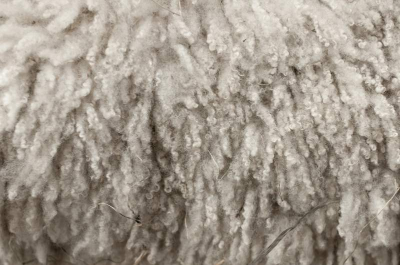 British Wool acquires Kent Wool Growers' business