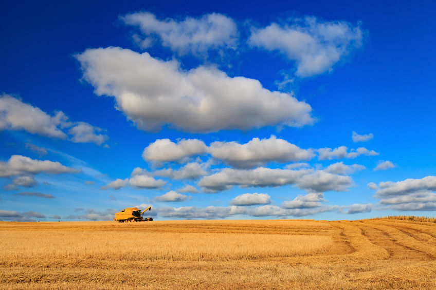 Wheat down, barley up in first Defra estimates