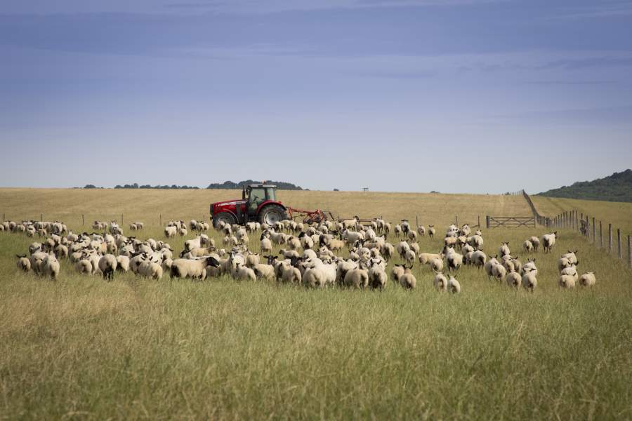 Imports of New Zealand lamb down as UK production increases