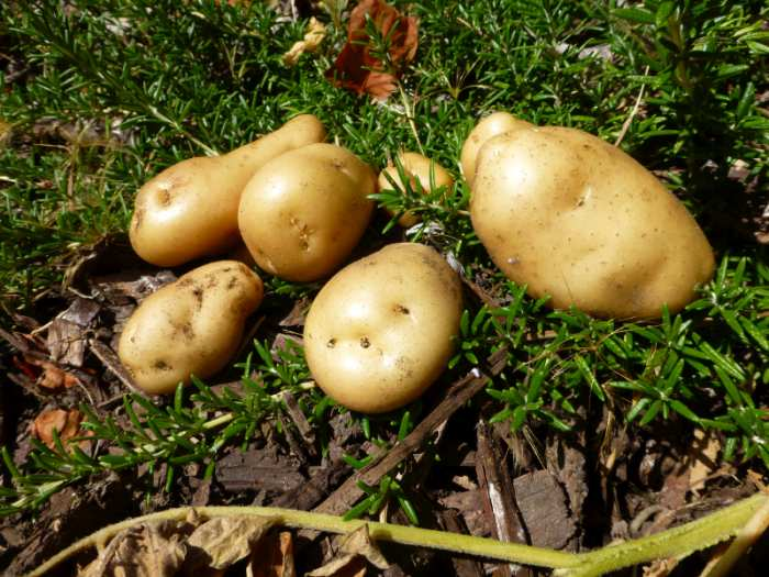 Potato farmers urged to consider safety as new initiative launched