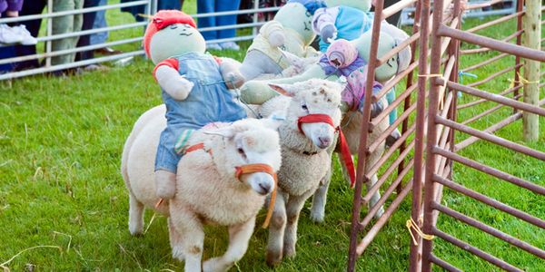 Sheep racing festival cancelled again after petition forces rethink