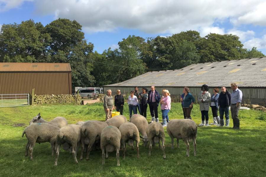 Government officials take tour of upland sheep farm to witness 'vital role' they play