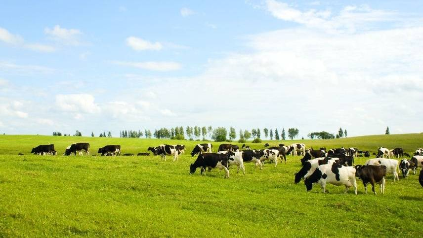Dairy prices set to increase worldwide, NZ dairy surge could boost global supply