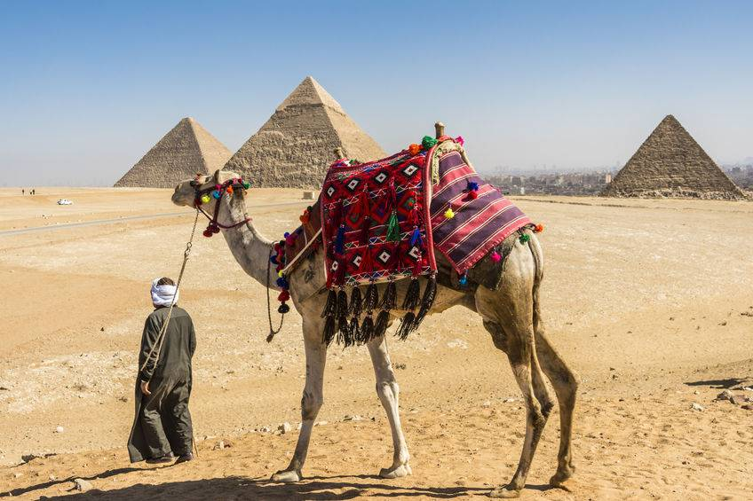 Egypt has a requirement of around 11 million tonnes a year and does not currently import any grain from the UK
