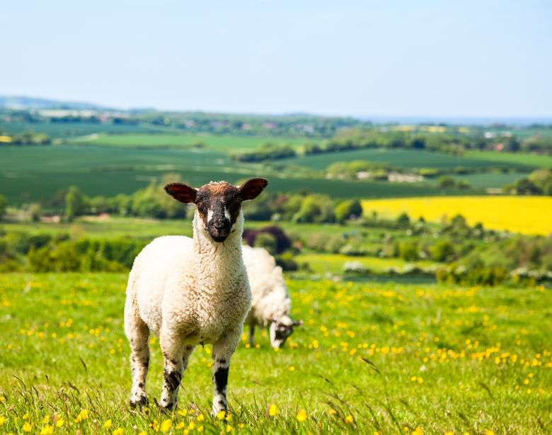 Welsh food and farming businesses set sights on Middle Eastern markets