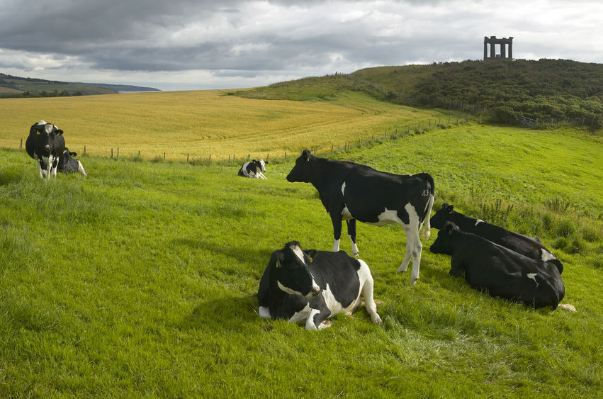 Dairy farmers in Scotland 'still being short-changed' despite price increases