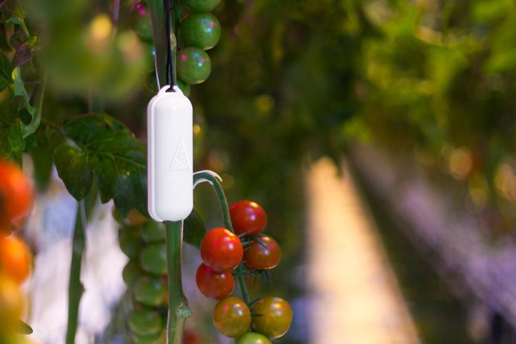 Three ways wireless sensor technologies help agriculture applications