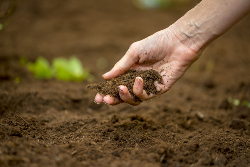"The Sustainable Soils Alliance said this is a ""major concern"" that the country must address."