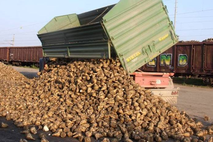 Major sugar beet contractor goes into administration