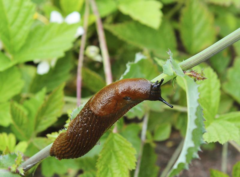 Yorkshire Water calls on farmers to manage use of slug-control pesticides