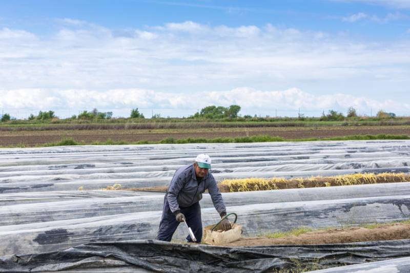 Farms were nearly a third short of workers in September, survey reveals