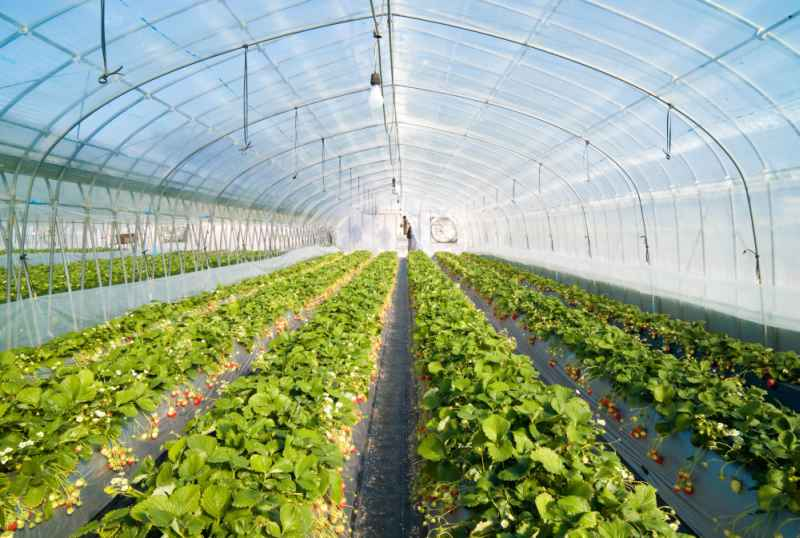 Horticulture 'must be treated as prime asset and nurtured carefully'