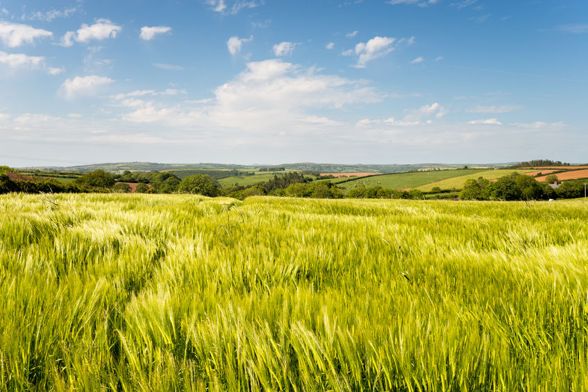 British grain will not do well outside EU due to 'low volume and poor harvest'