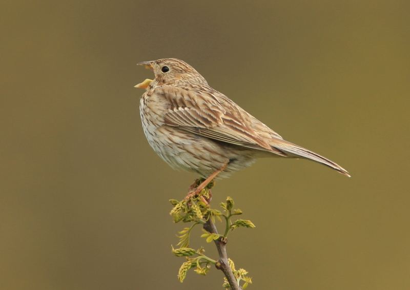 Farmland bird numbers decline by 9 per cent over 5 years