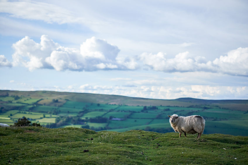 Welsh farmers want same concession as N Ireland regarding single market access