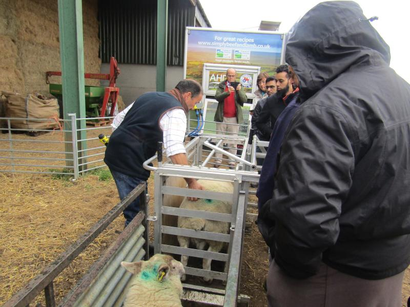 Halal stakeholders visit farm to gain greater understanding