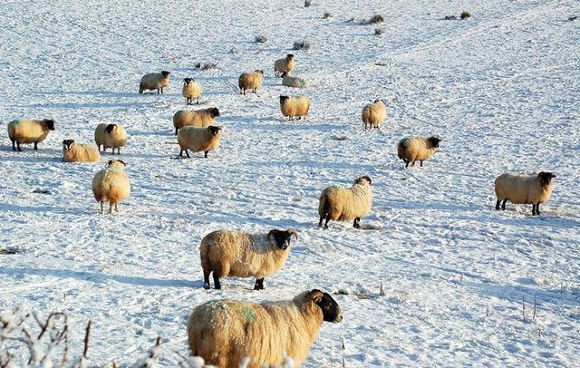 Farmers given advice as UK heads for deep freeze