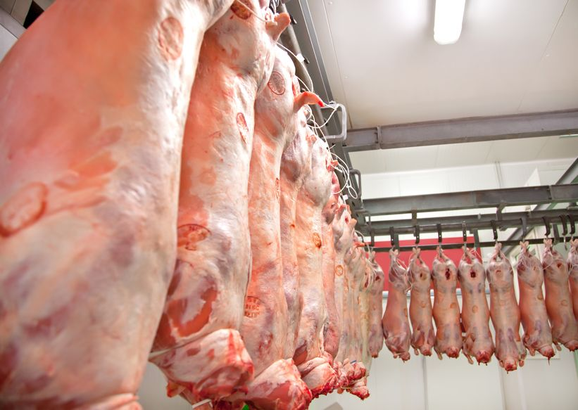 Rise in dirty livestock presented to abattoirs during winter