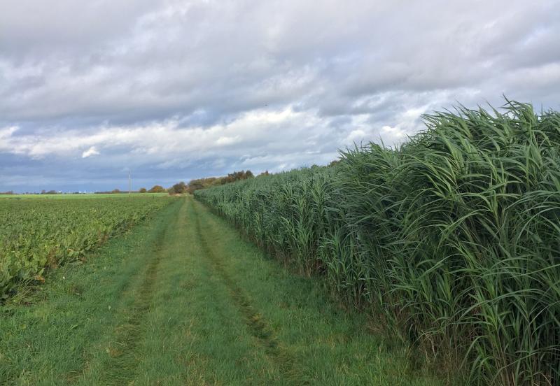 Farm walk showcases soil benefits of energy crop