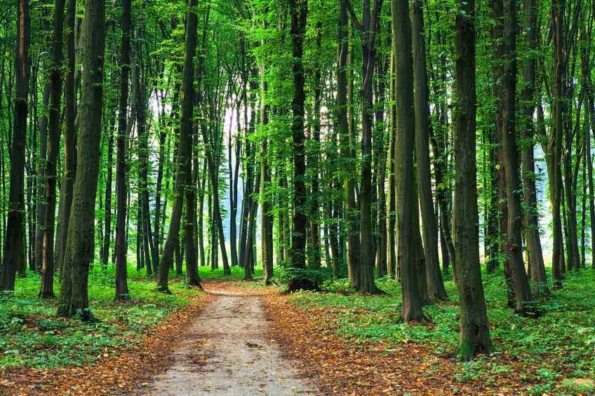 Countryside Stewardship Woodland Creation Grant has opened for applications