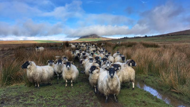 New group formed to promote environment friendly farming