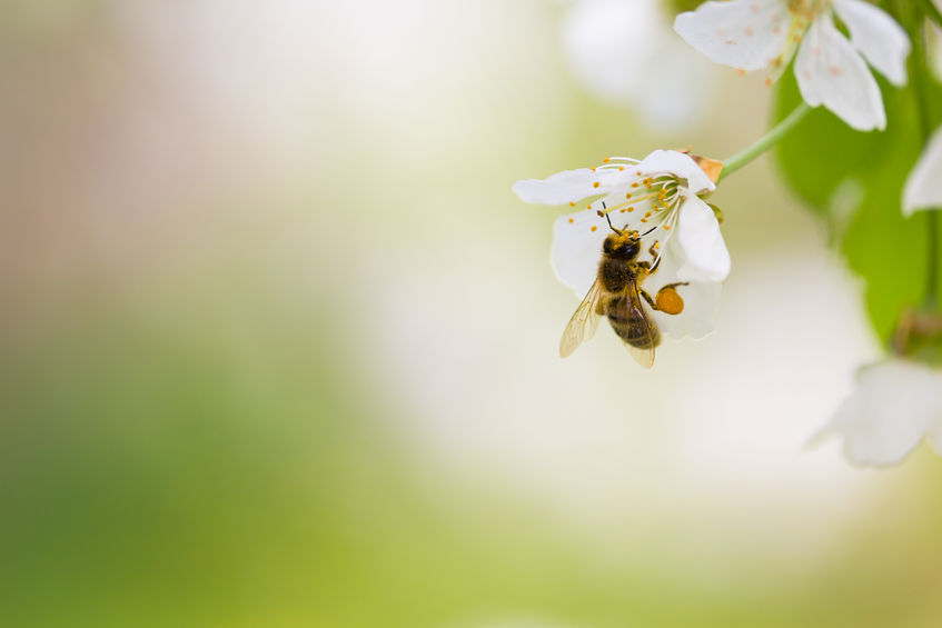 The mid-term review of the EU 2020 biodiversity strategy showed that pollination might be significantly decreasing