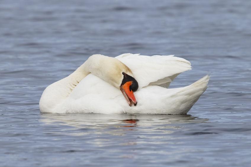 Seventeen wild birds confirmed with bird flu in Dorset
