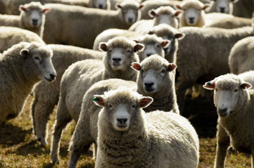 Walker punched Lake District farmer for moving his sheep, court hears