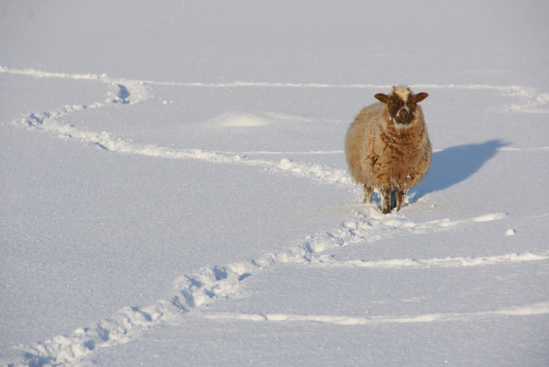 Met Office warns of more heavy snow and 'cut off' rural areas